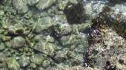 muchísimas piedras en el fondo del transparente agua