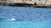 bañista nadando en el agua