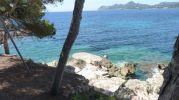 playa desde la sombra de un árbol