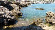 restos de algas en el fondo