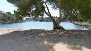 gran árbol en la arena que da mucha sombra