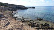 Rocas piedras y restos de árboles en la costa del Caló d'es Mort