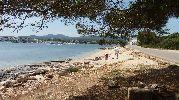vista de la playa desde la sombra de un árbol