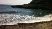 algas en la orilla