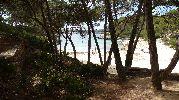 vista de la playa desde la sombra de los arboles