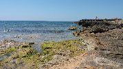 musgo en las rocas de la orilla