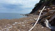 Cañas y posidonia en playa s'Hort de sa cova